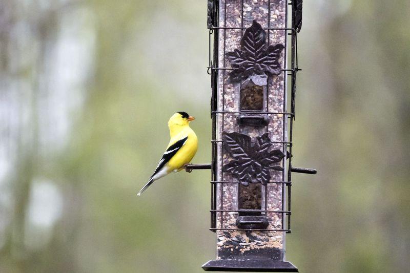Breakfast Bird