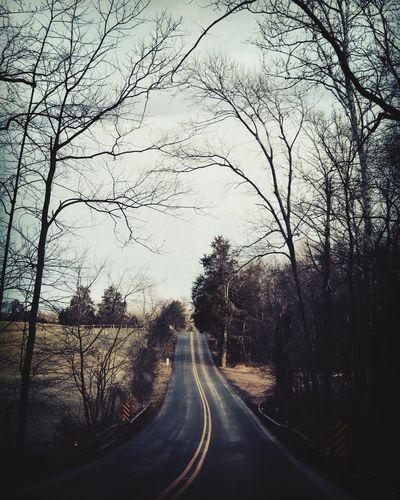 MiLeS to go Empty Road Way Ahead Bare Tree Nature