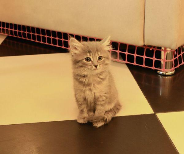 Portrait of kitten sitting on table