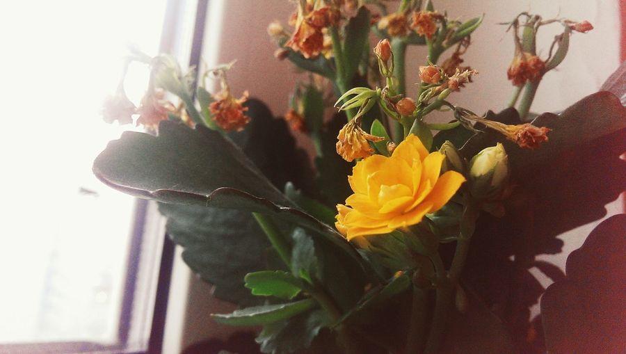 как напоминание о том, что все не так плохо. что есть надежда, на светлое будущее. Flowers Hope Revival Sign