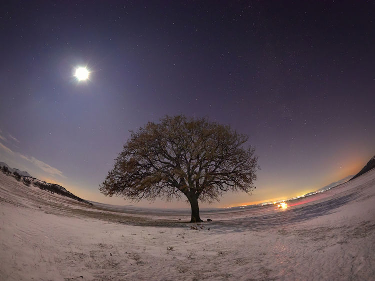 Landscaper Nature Olympus Romania Astronomy Bare Tree Beauty In Nature Clear Sky Cold Temperature Illuminated Landscape Moon Moonlight Nature Night No People Outdoors Scenics Sky Snow Star - Space Tranquil Scene Tranquility Tree