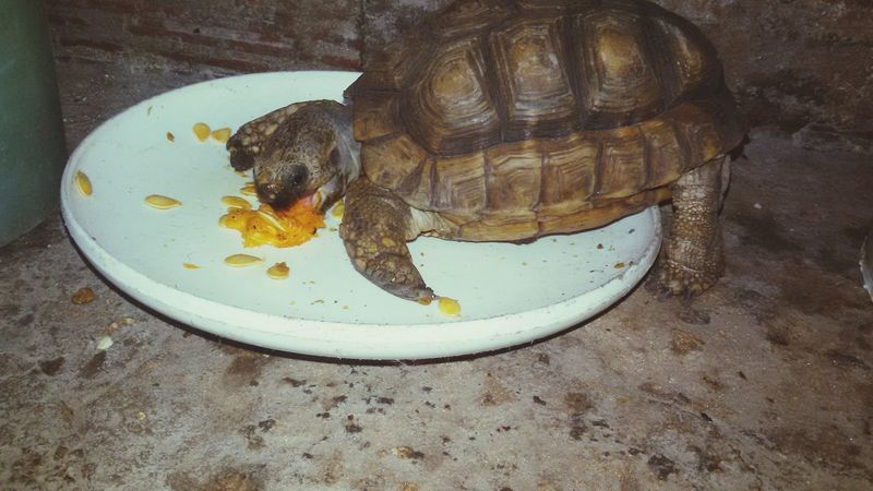 Turle ^.^ One Animal Eating Vegetable Love Animal