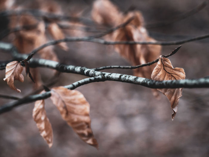 Focus On Foreground Close-up Tree Branch Dry No People Nature Plant Plant Part Day Leaf Wire Twig Outdoors Selective Focus Protection Change Safety Barbed Wire Security Dead Plant Leaves Dried Natural Condition