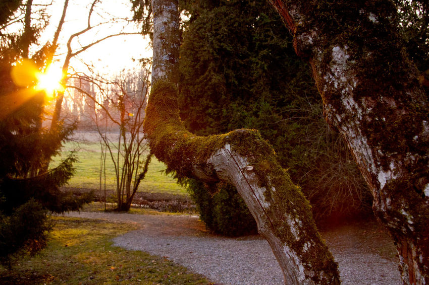 Beauty In Nature Day Landscape Nature No People Outdoors Parksite Sunlight Sunset The Way Forward Tranquil Scene Tranquility Tree