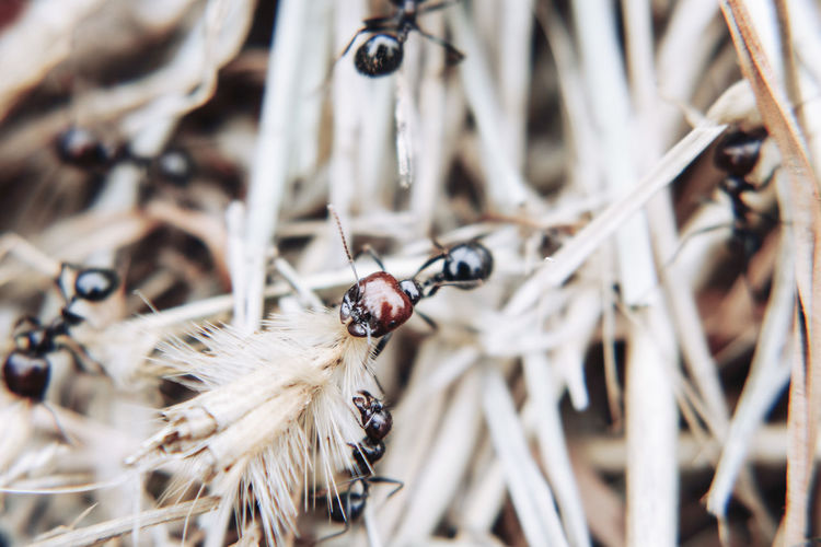 Close-up of ant in dried outdoors