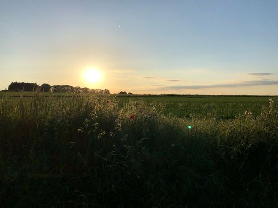 #Sunset on the Ridgeway #MobileSky #sun #sky #clouds Sunset MobileSky Sky Beauty In Nature Field Plant Tranquil Scene Scenics - Nature Tranquility Cloud - Sky Sun Rural Scene Lens Flare No People Idyllic Sunlight Land Landscape Growth Nature Environment Sunset