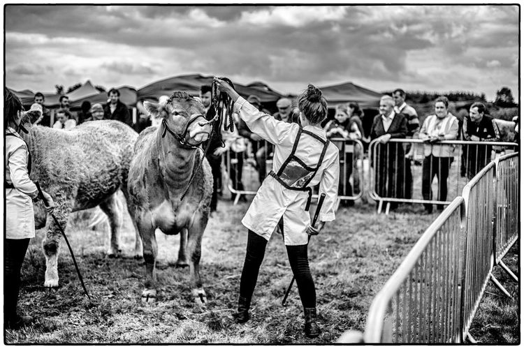 An agricultural show in Swinford, Ireland Agriculture Farm Life Ireland Cow Domestic Animals Mammal Sky Standing Women