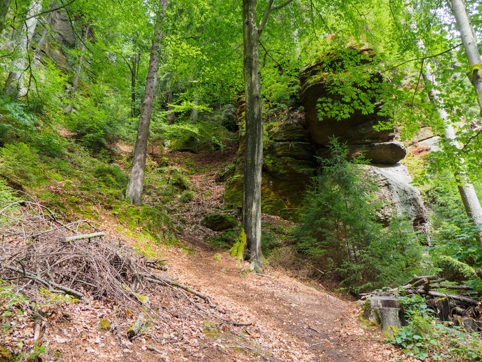 Woodland around the Gorges in Hrensko Tree Plant Growth Nature Forest Green Color No People Day Outdoors Land Tranquility WoodLand Woodland Walk