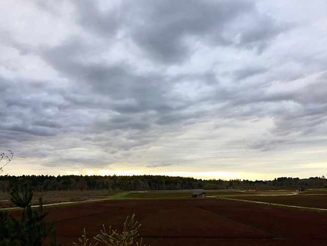 Cloud - Sky Sky Nature Landscape Field Beauty In Nature Tranquility Tranquil Scene Scenics No People Agriculture Outdoors Sunset Day Tree Cranberry Bog Storm Cloud