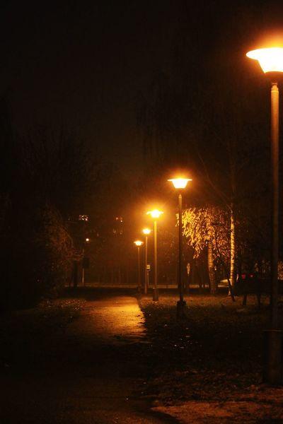 Evening lights Citylights Evening Illuminated Street Light Lighting Equipment Silhouette Electric Light Light Fixture