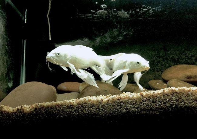 Fish Aqua Aquarium Aqua Life Fish Photography Aquarium Life School Of Fish Fish Tank EyeEmNewHere