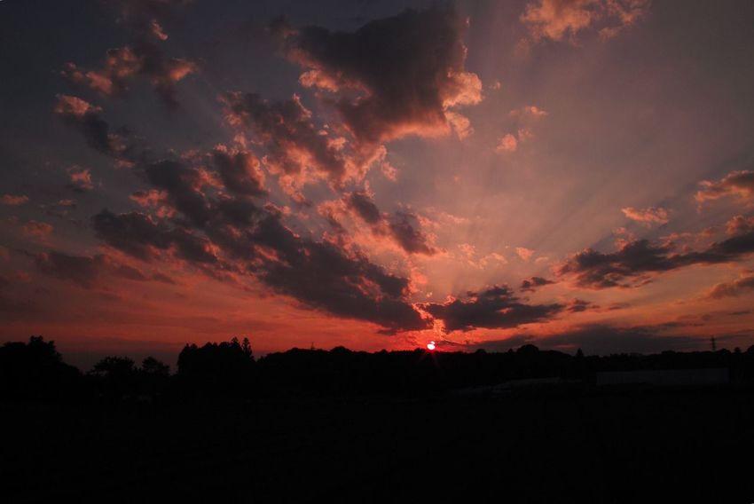 ヒグラシの蟬時雨 心なしか涼し気だ SigmaDP1X Afterglow Sunset Twilight おつかれさま