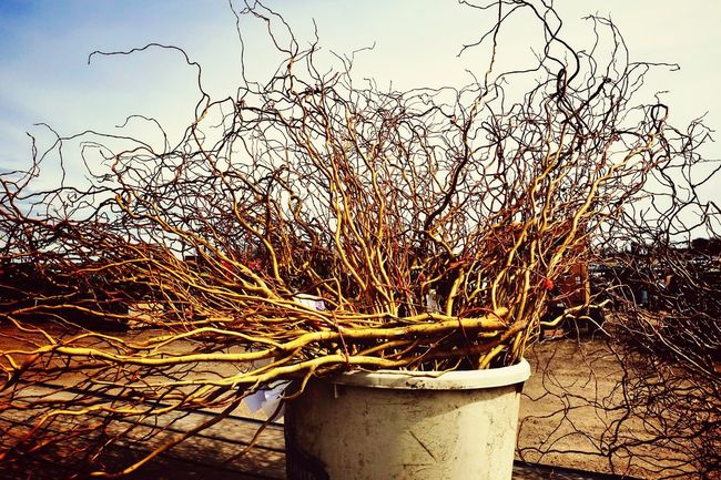 Saw some pine trees saplings for sale and these I have no idea what they are.. Branches Plants Shopping From My Point Of View Color Photography Auction Sale A Day In The Life Check This Out What Is This?
