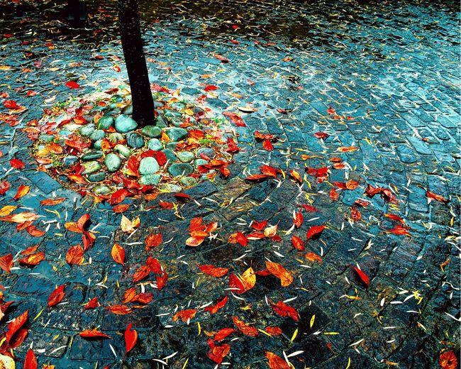 Rain Rainy Rainy Day Rainy Days Fall Fallen Leaves Red Leaves IPSWeather My Best Photo 2015 Fine Art Photography