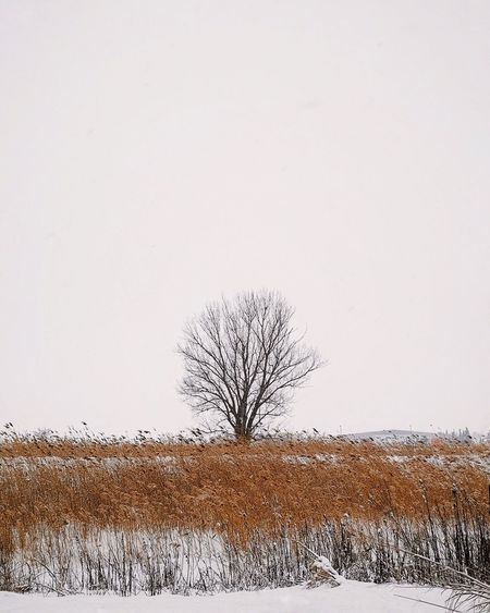 Like a wildfire on a snowy day Minimal VisitGreece Huawei Mate20pro Huaweimate20pro Solotree Tree Sky Plant Copy Space Bare Tree Nature Clear Sky Cold Temperature Snow Winter No People Tranquil Scene Tranquility My Best Photo