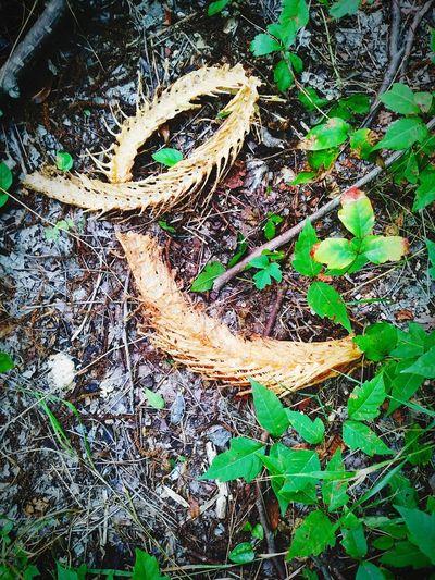 bones Snake