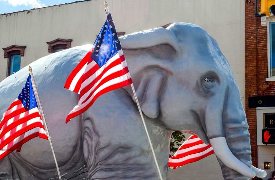 A large fake elephant represents the republican democratic party in the USA. This one is part of a float in a parade, with USA flags all around Event Republican USA American Flags Animal Building Exterior Built Structure Close-up Day Elephant Floating On Water No People Outdoors Parade Patriotism Politics And Government Stars And Stripes Statue The Photojournalist - 2018 EyeEm Awards