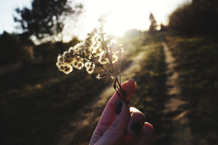 Sunrays Sunset Shadow Shadows & Lights Outdoors Wildlife & Nature Nature Photography Woods Nature_collection Wildflower Flower Head Nature Bokehlicious Bokeh Bokeh Photography Human Hand Nail Polish Holding Close-up Sky Personal Perspective Silhouette Focus On Shadow Long Shadow - Shadow Orange Color Optical Illusion