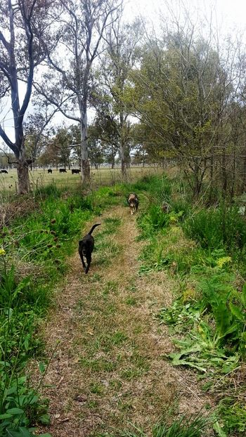 Caminata por el bosque Forest Cold Days Dogs