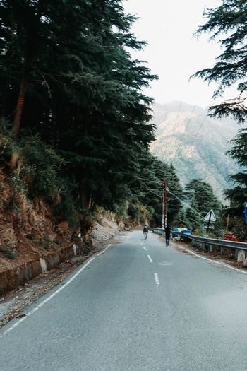 Road amidst trees and mountains