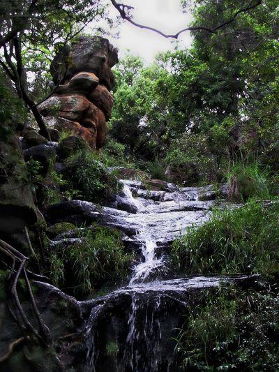 Rock Rock - Object Stream - Flowing Water Stream In The Forest Tree Water