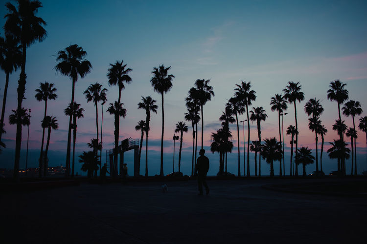 Las Palmas de Gran Canaria, 7 am Silhouette Tree Palm Tree Tropical Climate Sky Plant Nature Real People Beauty In Nature Dawn People Outdoors Tranquil Scene Lifestyles Group Of People Scenics - Nature Gran Canaria Las Palmas De Gran Canaria