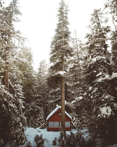 Winter hikes at Franklin Falls Winter Snow Tree Cold Temperature Pine Tree Nature Forest Pine Woodland Weather Beauty In Nature No People Outdoors Architecture Scenics Day Landscape Sky Snowing Wanderlust Washington State PNW Traveling Home For The Holidays
