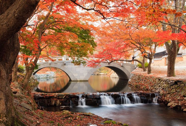 I want to show you the beauty of korea. Autumn Tree Nature Scenics Water Beauty In Nature Korea Travel Destinations Landscape