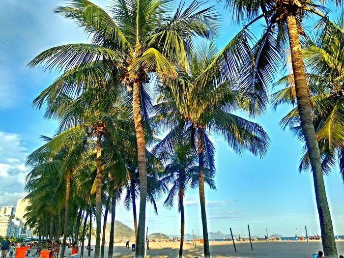 Beach Palmtrees Blue Sky Riodejaneiro