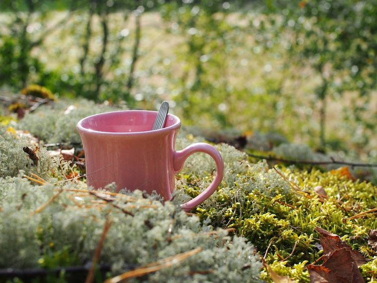 Coffee tastes better outside Coffee Time Go Outside Nature On Your Doorstep Sunshine Makes Everything Better Snapshots Of Life Autumn Is Coming