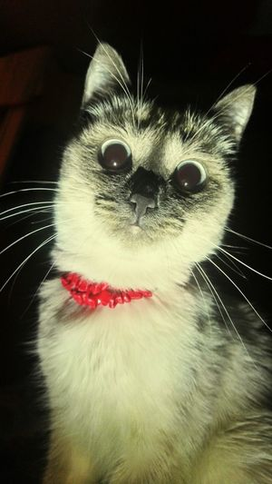 Check This Out Cute Pets Cat Cat Cute Animals )))) )))