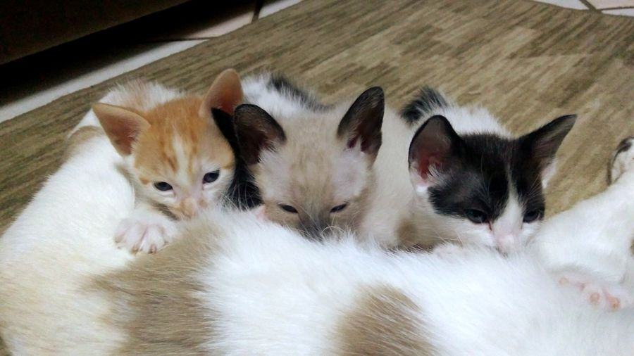 High angle view of cats relaxing