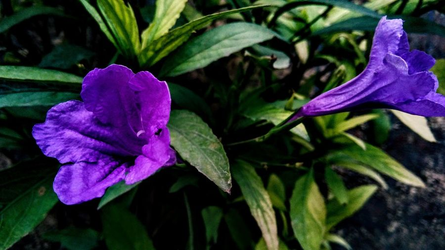 "Just a ""Flower"" Purple Flower Alone Ant Natural Color Flower Head Flower Leaf Petal Purple Close-up Plant Green Color"