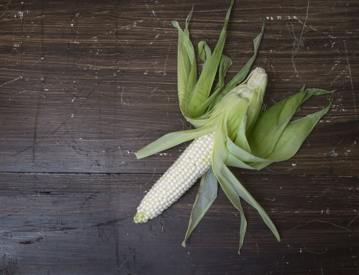 High Angle View Of Corn Cob
