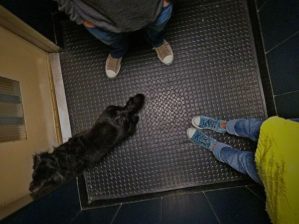 Elevator Dog Awkward Moments All Stars