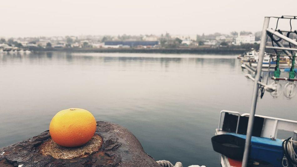 JEJU ISLAND  Mandarin Orange Port