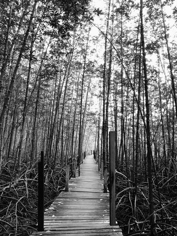 Mangrove Mangrove Forest Nature Nature_collection Nature Photography Blackandwhite Blackandwhite Photography Wooden Way Wooden Walkway No People Outdoors Into The Woods Silence Art ArtWork 2017 Eyeem Awards Holiday