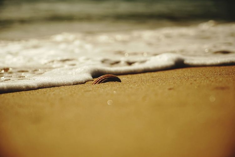 Shell Shells🐚 Nature Ocean Photography Nature Photography