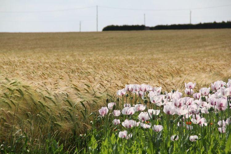 Nuances...... Nature Eyem Best Shots Flower Landscape