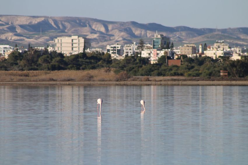 Cyprus Larnaca, Cyprus Larnaca Larnaca Bird Water Animals In The Wild Nature Reflection Flamingo Animal Themes No People Lake Day One Animal Waterfront Outdoors Built Structure Building Exterior Architecture Beauty In Nature Sky