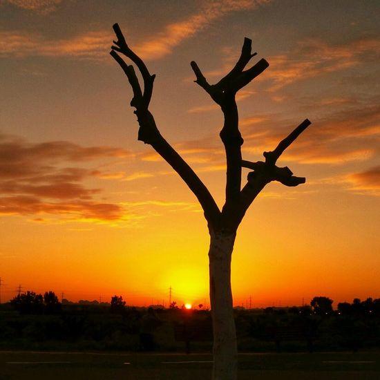 Tree Porn Nature_collection EyeEm Nature Lover Eyeem Best Shots - Silhouette