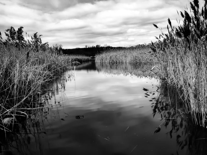 Clouds over water..... Lgarciaphoto IPhone 7 Plus IPhone Iphoneonly Shot On IPhone IPhoneography Monochrome Nature Nature_collection Black & White Blackandwhite Lyndhurst New Jersey New Jersey Water Sky Reflection Tranquil Scene Lake Tranquility No People Outdoors Growth Scenics Grass Beauty In Nature Landscape Day