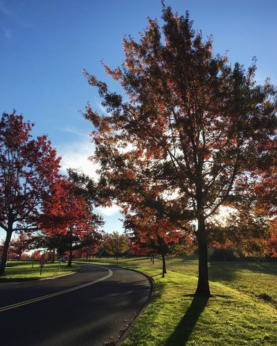 Fall in Vancouver, Washington. University Campus Fall Sunset Bright Blue Sky Green Grass Pacific Northwest  Fall Colors The Way Forward Growth Outdoors Landscape Sky Scenics Sunlight No People Clear Sky Grass