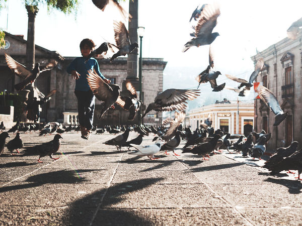 Flying Adapted To The City Motion Flying People One Person Outdoors Adventure Children Children Photography Play Xela , Quetzaltenango Guatemala Travel Destinations Traveler Birds Birds In Flight Dreamscapes & Memories Young Adult Day Pigeons Pigeons Everywhere Birds Of EyeEm  Uniqueness Breathing Space Investing In Quality Of Life