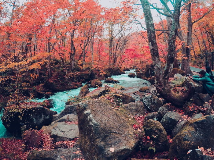 by far, my favorite place in Japan Japan Canon Canonphotography Photography Photographyislife Autumn Gopro Goprohero4 Naturephotos Naturephotography EyeEm Selects Oirasegorge Landscape Landscape Photography Japan Photography Trees Colorful Outdoors Day No People Tree Nature Beauty In Nature Sky