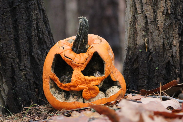 Jack O' Lantern around the Christmas Holiday. Close-up Day Human Representation Jack O Lantern Nature No People Orange Color Outdoors Pumpkin Tree Tree Trunk Been There.