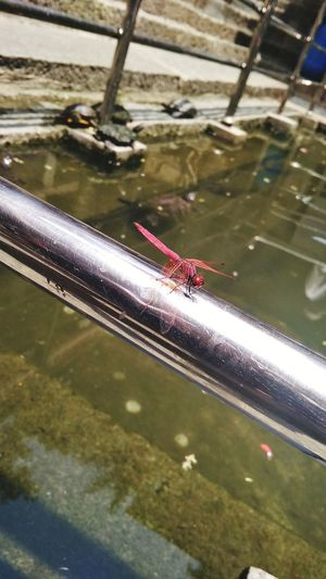 Insect Photography Water Wet Reflection High Angle View Close-up Animal Themes
