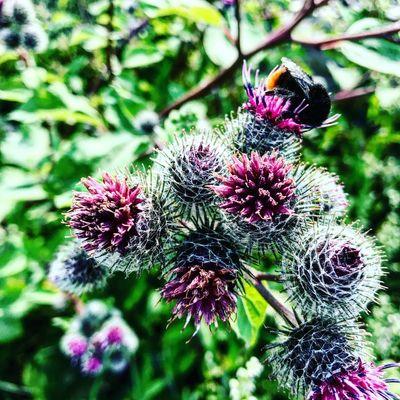 🐝 Flower Breathing Space