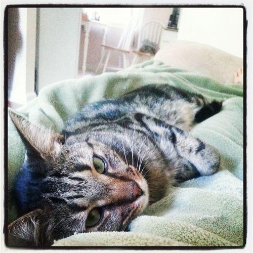 Furbaby Cat Catlife