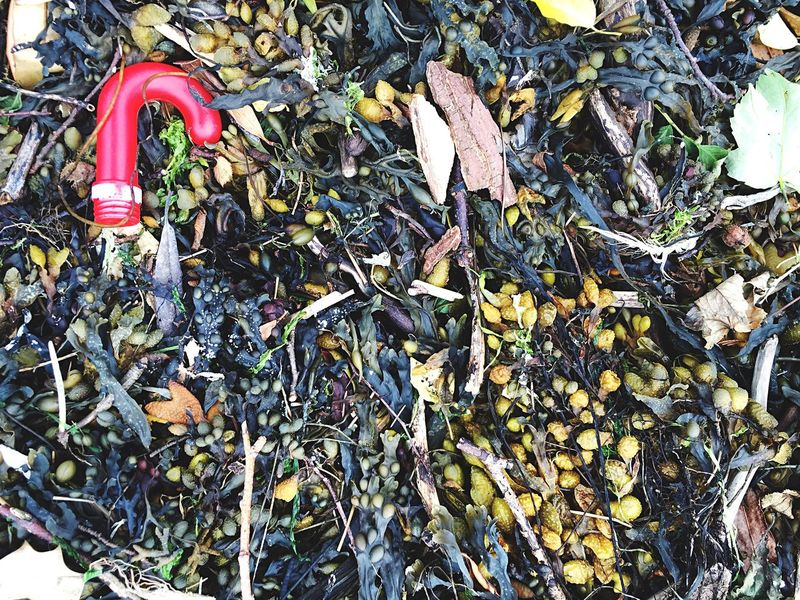 Pebbles Beachphotography Seaweed Rubbish Litter